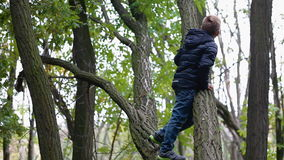 Little boy climb the old tree stock video footage