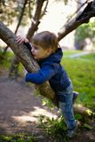 Little boy climb up on tree Stock Images