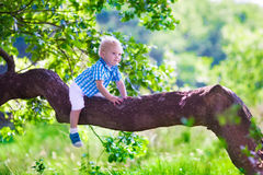Little boy climbing a tree Royalty Free Stock Images