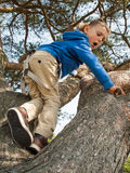 Little boy climbing in a tree Stock Image