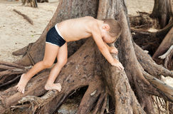 A little boy climbs a tree Royalty Free Stock Photography