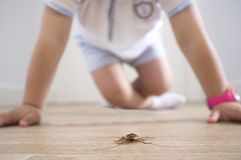 Little boy close to cockroach on the house floor royalty free stock images