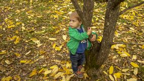Little boy clung to a tree at the park stock photos