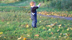 Little boy collecting autumn leaves stock footage