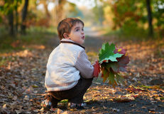 Little boy with colorful leaves Stock Photo