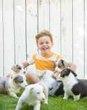 Little boy and corgi puppies stock image