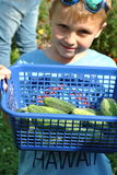 Little boy with cucumber. Seven-year-old holding fresh cucumber in the garden stock image