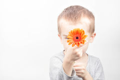Boy with flower. Little boy with daisy flower on white background Stock Images