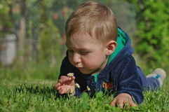 Little boy with daisy 3 Royalty Free Stock Image