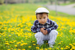 Little boy in a dandelion field Royalty Free Stock Images