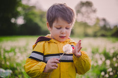 Little boy in dandelion field Royalty Free Stock Photos