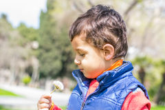 Little boy with a dandelion Royalty Free Stock Photos