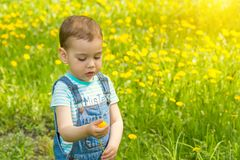 Little boy with dandelion royalty free stock photos