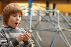 Little boy with dandelion Stock Image