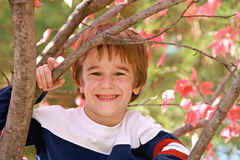 Little Boy dans un arbre images libres de droits
