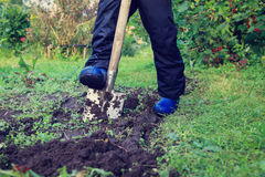 Little boy digging in the garden Stock Photography