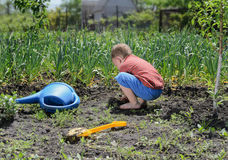 Little boy digging in the vegetable garden. Little boy digging vegetable garden turning over soil with his spade  plastic watering can lying on ground alongside Royalty Free Stock Images