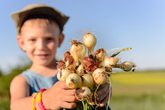Little boy displaying a bunch of fresh onions Royalty Free Stock Photo