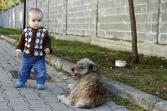 Little boy with a dog Stock Images