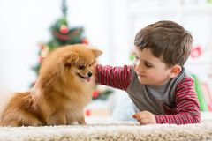 Little boy and dog at Christmas stock photos