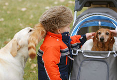 Little boy and dogs. A view of a little boy wearing a fur pioneer hat as he pets a small dog and is nuzzled by another Stock Images