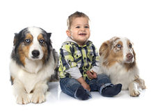 Little boy and dogs stock image
