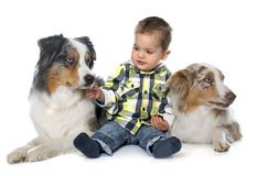 Little boy and dogs stock photo