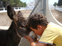 A little boy and a donkey stock photography