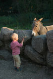 Little boy and donkey in zoo Royalty Free Stock Photography