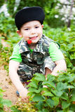 Little boy eat berries. Little boy sitting on beds, eat berries Stock Photos