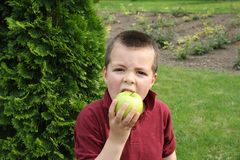 Little boy eating apple Stock Photo