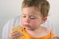 Little boy eating  biscuit. A little boy eating  biscuit Royalty Free Stock Photos