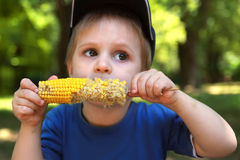Little boy eating corn on the cob Royalty Free Stock Photography