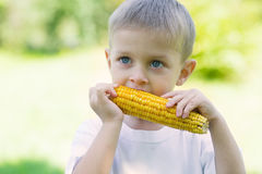 Little boy eating corn Stock Images