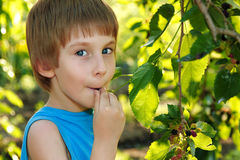 Little boy eating mulberry Royalty Free Stock Photo