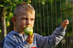 Little boy eating pear Stock Images