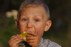 Little boy eating pear 3 Royalty Free Stock Photo