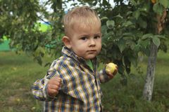 Little boy eating red apple in orchard stock image