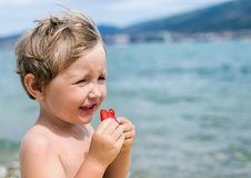 Little boy eats strawberries with pleasure Stock Images