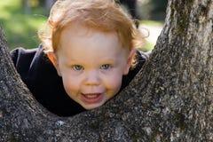 Little Boy in een Boom Royalty-vrije Stock Afbeeldingen