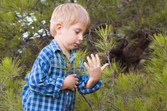 Little boy embrace a tree Stock Photo