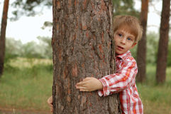 Little boy embrace a tree. Care for nature - little boy embrace a tree royalty free stock photo