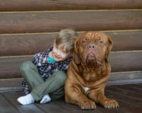 Little boy embracing big Bordeaux dog.  Royalty Free Stock Images