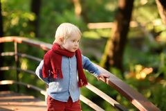 Little boy enjoy stroll in the sunny forest or in summer park royalty free stock photography