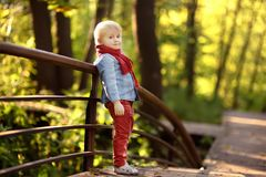 Little boy enjoy stroll in the sunny forest or in summer park royalty free stock images