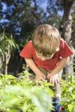 Little Boy Examining Leaves Royalty Free Stock Image