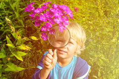 Little boy exploring flowers in the garden with magnifying glass Royalty Free Stock Photo