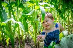 Little boy farmer in the corn field Stock Photos