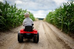 A little boy farmer is driving a small tractor on a dirt road through a cornfield royalty free stock photography
