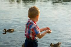 A little boy feed birds on the lake. A little boy feed the ducks, back view. A little boy feed birds on the lake stock image